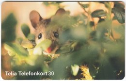 SWEDEN A-848 Chip Telia - Animal, Wood Mouse - Used - Schweden