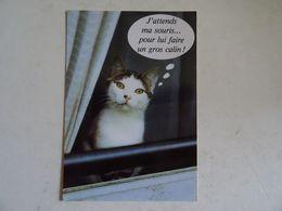 """CPSM  Le Chat """"j'attends Ma Souris Pour Lui Faire Un Gros Calin   TBE - Katzen"""