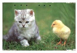 (13-8-20 X) 2 Cat - Chat - Katze - ネコ -Carte Tephone / Phonecard / Telefonkarte / Carta Telefonica / Tarjeta Telefónica - Katzen