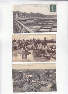 Ostréiculture  / Lot De 3 CP / Chatelaillon Et Cancale / Parcs, Peche Huitres  / Dim 9 X 14 Cm - Pesca