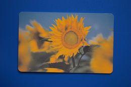 Vladimir. Sunflower. 50 Un. 31.12.2005 (62 002) Glossy - Russland