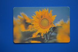 Vladimir. Sunflower. 50 Un. 31.12.2004 (62 001) Matt - Russland