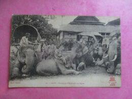 LAOS CARAVANE D'ÉLÉPHANTS AU REPOS ANIMÉE - Laos