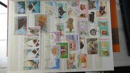 G106 Collection Thématique CHATS Et FELINS. A Saisir !!! - Stamps