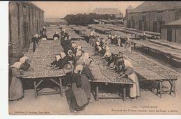Morbihan > Quiberon, Femmes Des Usines Mettant Leurs Sardines A Sécher - Quiberon