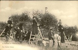 FRANCE - Carte Postale - Cueillette Des Olives En Provence - L 67319 - Cultures