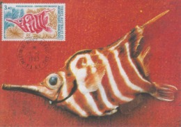 Carte  Maximum  1er  Jour   T.A.A.F   Poisson  Bécasse   1993 - Fishes