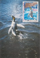 Carte  Maximum  1er  Jour    TAAF     Manchots  Argos    1998 - Pingouins & Manchots