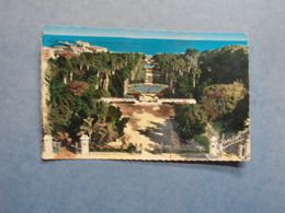 ALGER  -  Jardin D'Essai  -   Algérie - Alger
