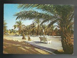 REF 63 - ALGERIA - TINDOUF - IL GIARDINO - VIAGGIATA - 1982 - Autres Villes