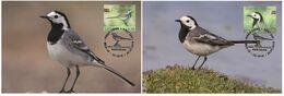 Latvia Lettonie 2019 - Europa 2019 - National Birds Maximum Card Set - Latvia