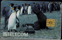 CZECHOSLOVAKIA  1996 PHONECARD PINGUINS USED VF!! - Pingouins & Manchots