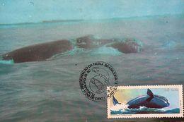 A) 1987, BRAZIL, WHALE, PRESERVATION OF BRAZILIAN FAUNA, FLORIANOPOLIS SC, 1 DAY OF CIRCULATION, ECT, 2.00 - Brazil