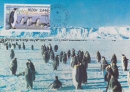 Carte  Maximum  1er  Jour    TAAF   Manchots  Empereurs    2000 - Pingouins & Manchots