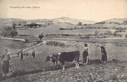 Cyprus - Ploughing With Oxen (Ox Team) - Publ. Foscolo. - Cyprus