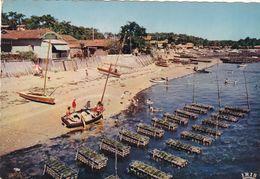 33. BASSIN D'ARCACHON.  LES CAGES A HUÎTRES . ANNEE 1960 + TEXTE - Arcachon