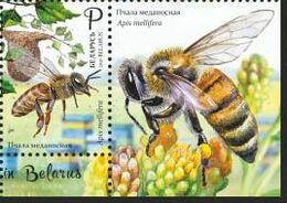 Belarus 2020 Bee Beekeeping Fauna Insects 1v + Label Zrf MNH - Bielorussia