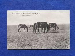 Tashkent Road Horses - Turkmenistan