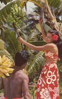 TAHITI, 1940-60s; Gathering Fruit - Tahiti