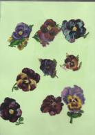 9  Découpis  FLEURS Pensées 6 X 5 Cm   75 - Flowers