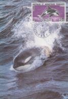 Carte  Maximum  1er  Jour    TAAF    Orque    1993 - Mammifères Marins