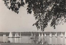 Templiner See Bei Potsdam - 1968 - Potsdam