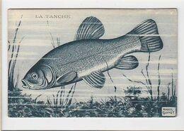 """Peche / Poisson / La Tanche / Série """"poissons D'eau Douce Rivieres De France / Raoul Guinot - Pesca"""