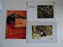 3 CPSM Chats   TBE - Katzen
