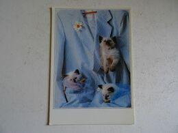 CPSM Les Chatons   TBE - Katzen