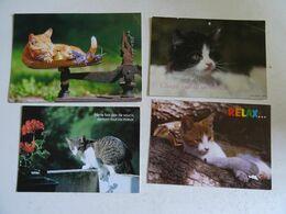 4 CPSM DE  ChatS   TBE - Katzen