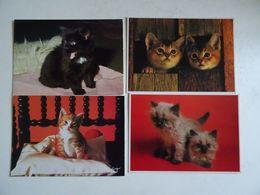 4 CPSM LE CHAT Les Chatons  TBE - Katzen