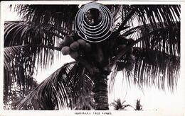 Cocoanut Tree Spore - Singapore - Mai 1951 - Editeur Leonar - Singapore