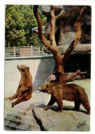 NANCY - La Pépinière - Les Ours Du Parc Zoologique - Bears