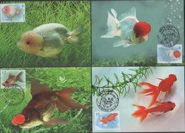 2020 R.O CHINA(Taiwan)- Maximum Cards -  Aquatic Life Postage Stamps — Goldfish (II)  (4V) - 1945-... Republic Of China