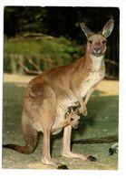 Parc Zoologique De BASEL - BALE - Kangourou - Birds