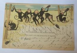 Affen, 1.April, Betrunkene Affen,     1899  ♥ (8876) - Affen