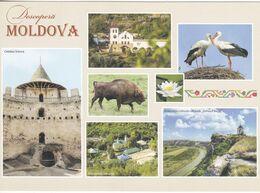 2018 , Moldova , Moldavie , Moldavia , Moldau , Flowers , Birds , Fortress , Postcard - Moldavia