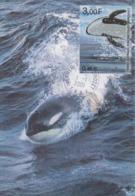 Carte  Maximum  1er  Jour    TAAF    Orque    2001 - Mammifères Marins