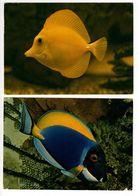 54 - NANCY - Aquarium Tropical - Musée Zoologique - Poissons (2 Cartes) - Fish & Shellfish