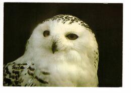 01 - VILLARS LES DOMBES - Parc Ornithologique De La Dombes - Chouette Harfang (Pays Arctiques) - Birds