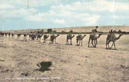 SUDAN - Camel Caravan 1965 - El-Obeid - Sudan