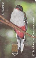 Nº 063 TARJETA DE CUBA DE EL TOCORORO (BIRD-PAJARO) - Kuba