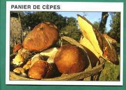 Panier De Cepes ( Champignons, Funghi, Mushrooms, Pilze, Hongos, Grzyby, Svamp ) - Mushrooms