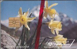 AND026 - Narcisses Jaunes - Andorra