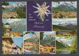 106197/ MITTENWALD, Ein Echtes Edelweiss - Mittenwald