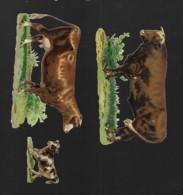 3 Découpis VACHE TAUREAU Et VEAU   112 - Animals