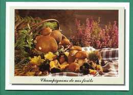 Champignons , Funghi De Nos Forets ( Cepes, Girolles, Trompette De La Mort, Chataignes, Glands ) - Mushrooms
