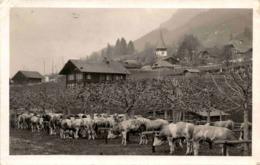 Erlenbach * 3. 3. 1922 - BE Berne