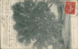 02 TRUCY / Chene Plante En 1794  / - Sonstige Gemeinden