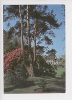 Varengeville Sur Mer : Le Parc Du Bois Des Moutiers N°2 (architecte Edwin Lutyens Pays Gertrude Jekyll) Rhododendron - Alberi